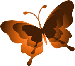 butterfly_smleft